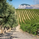 Donnafugata launches two new wines  for a 2006 that will be remembered