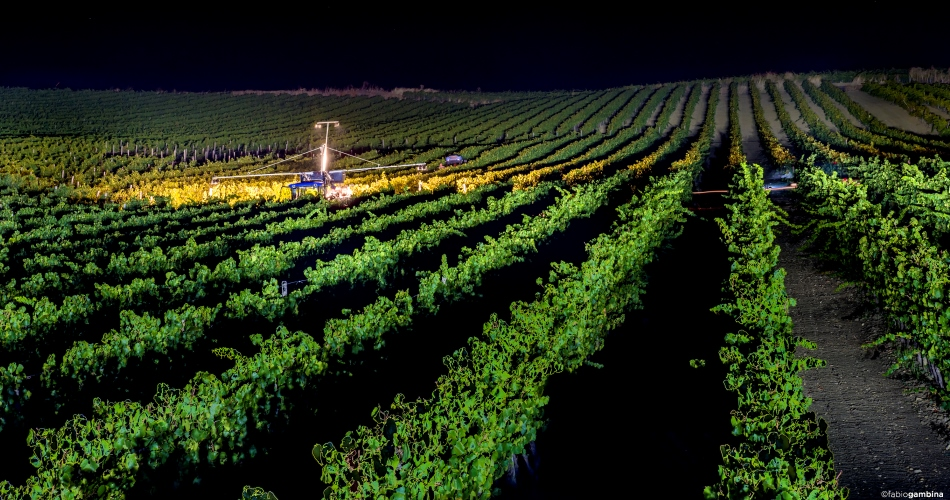 DONNAFUGATA'S  NIGHTTIME HARVEST TRANSMITTED LIVE FOR THE FIRST TIME