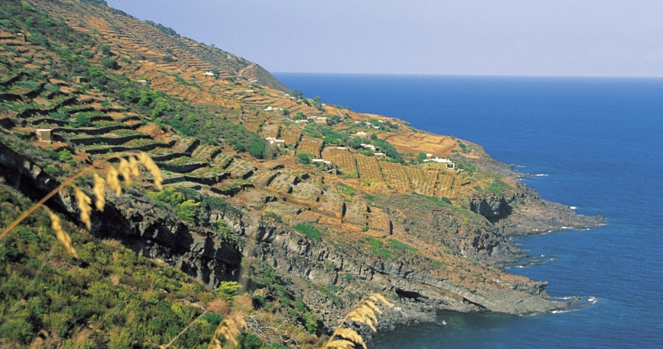 From Pantelleria, an appeal to the value of terraced landscapes